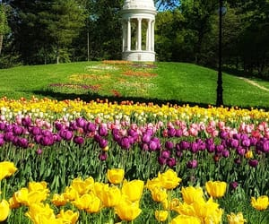 flowers, nature, and park image