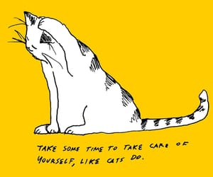 cat, yellow, and quotes image