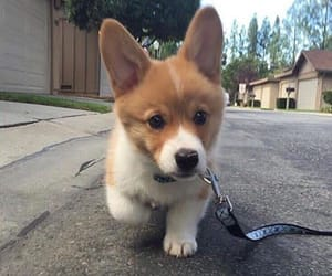 dog, mischief, and cute image