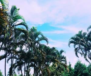 beautiful, dEUS, and ilha image