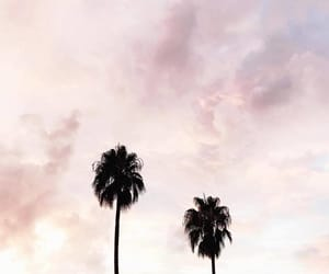 clouds, nature, and palm trees image