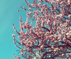 cherry blossom, color, and nature image
