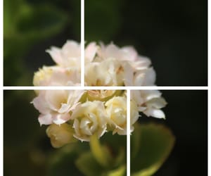 green, flower, and white image