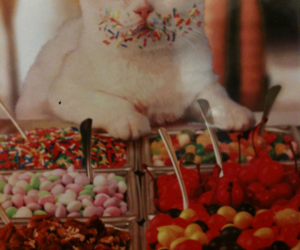 cat, sweets, and eyes image