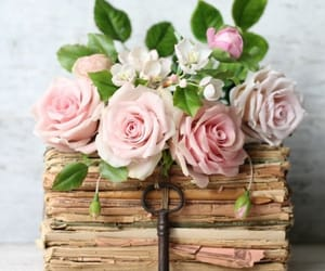 flower, flowers, and pink roses image