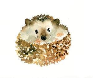 hedgehog, watercolor, and animal image