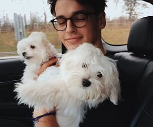 blake steven and boy with puppies image