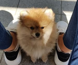animal, shoes, and sneaker image