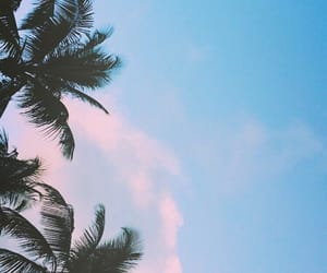 aesthetic, palmtrees, and pinkclouds image