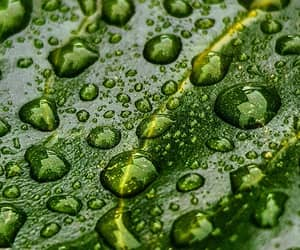drops, green, and leaf image