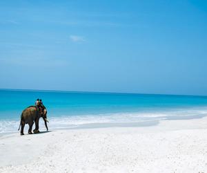 beach, elephant, and summer image