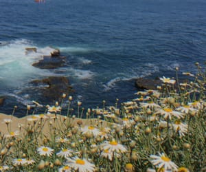 flower, flowers, and rocks image
