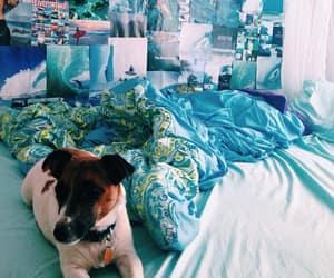 dog and blue image