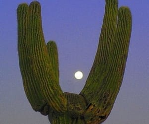 cactus, blue, and grunge image