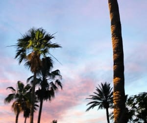 palms, sky, and sunset image