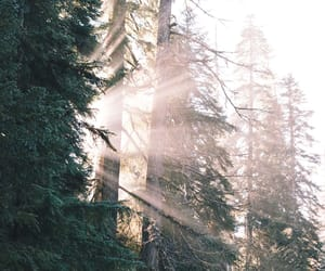 forest, pacific northwest, and P image