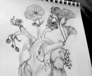 draw, flowers, and sweet image