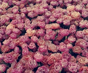 april, festival, and flower image