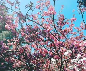 nature, pink, and sakura image
