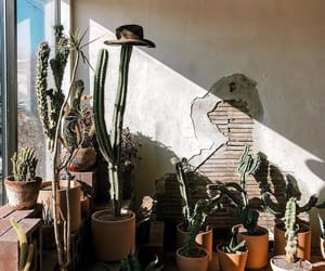 cacti, cactus, and green image