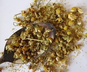 camomile, chamomile, and herbal tea image