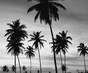 beach, fun, and black and white image