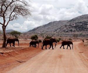 elephants, animal, and beautiful image