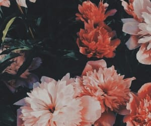 flowers and flores image