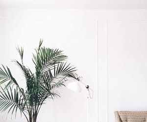 plant, white, and tumblr image