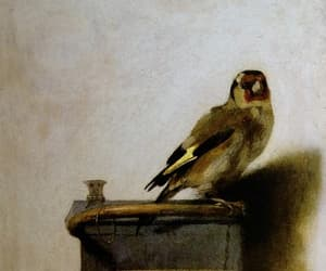 bird and goldfinch image