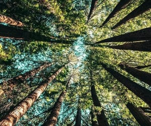nature, outside, and woods image