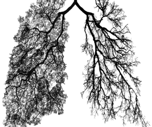 lungs, tree, and green image