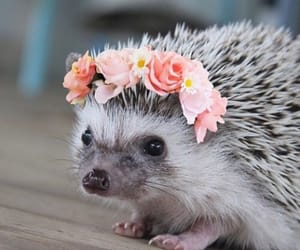 Hedgehog 🌸
