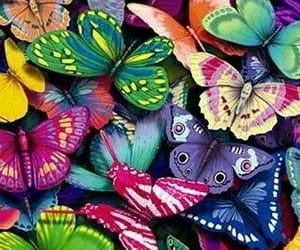 background, spring, and butterfly background image
