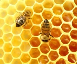 honey, bee, and yellow image