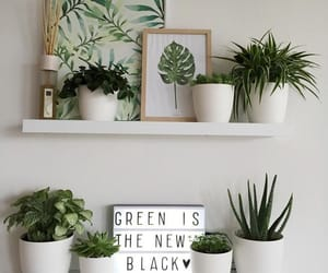 green, plants, and home image