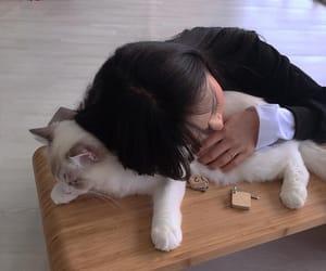 cat, girl, and korea image