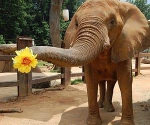 elephant, flowers, and animal image