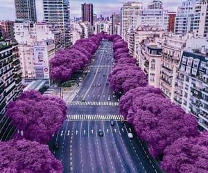 city, purple, and argentina image