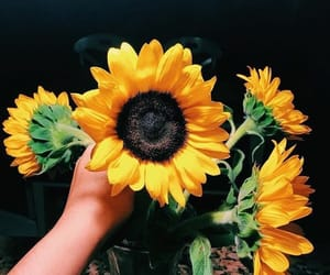 flowers, sunflower, and beautiful image