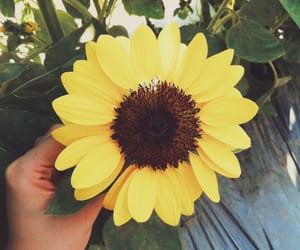 floral, summer, and sunflower image