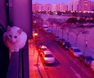 cat, pink, and neon image