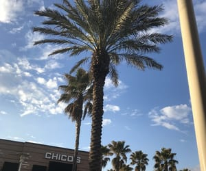 aesthetic, mall, and palm trees image
