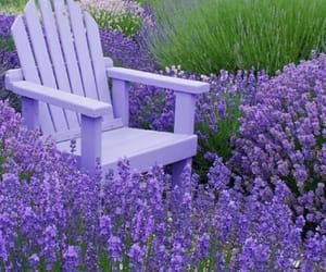 purple, chair, and garden image