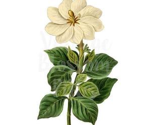 wedding, floral illustration, and botanicals image