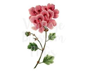 botanical, graphics, and printable image