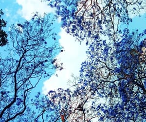 arbol, blue, and cielo image