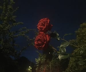 rose, aesthetic, and theme image