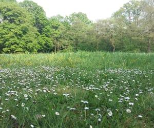 beautiful, garden, and grass image