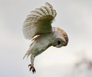 animal, harry potter, and nature image
